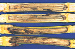 Stalk rot initiated from European corn borer tunnels.