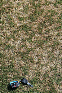 Figure 5. Individual dollar spots are more distinct on turf that is mowed at heights of roughly 8 mm (< 1 inch) as on this creeping bentgrass (Agrostis palustris).Note how spots have coalesced in this photo.When this type of situation occurs, dollar spot can become difficult to distinguish from diseases such as Pythium blight.(Courtesy P. Vincelli)
