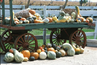 Figure 18. A cucurbit fruit showcase in a farm in Illinois. (Courtesy M. Babadoost)