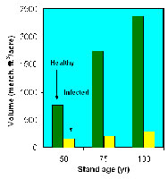 Figure 30. Stands of healthy trees contain more, larger trees than stands of mistletoe-infected trees. The 50-year old stands we