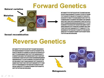 An Introduction To Reverse Genetic Tools For Investigating Gene