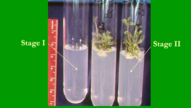 Activity 5 Plant Tissue Culture