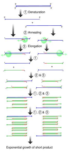 Activity 4: Transformation of E  coli using green fluorescent protein