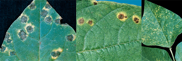 What Are Fungicides