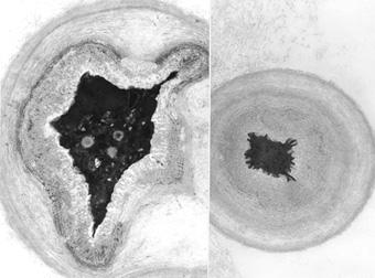 factors affecting belowground biocontrol activity in Int j food microbiol 2012 sep 17159(1):17-24 doi: 101016/jijfoodmicro 201207023 epub 2012 jul 31 environmental factors affect the activity of  biocontrol.